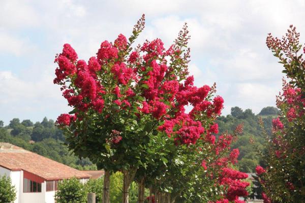 Nos Offres Plantes D Aquitaine